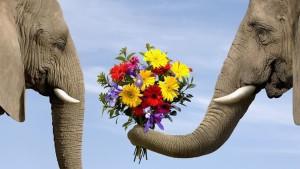 vendita-fiori-on-line_NG4