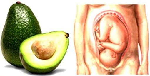 04654_avocado