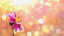 fiore-con-api-220