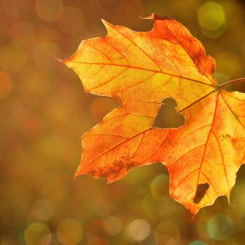 equinozio-autunno-foglia-cuore